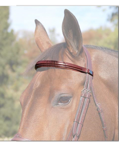 Dy'on Square Raised New English Browband - New!