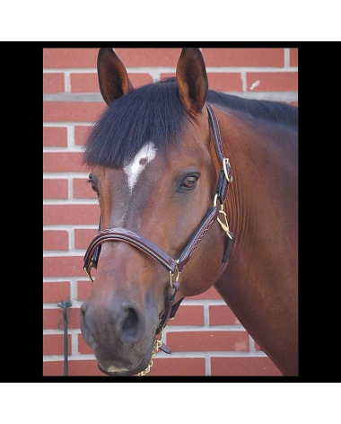 Dy'on Collection Fancy Head Collar (Halter) - Cob - New!
