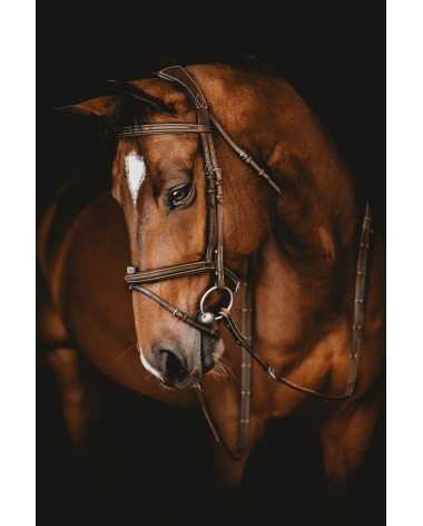 Arion Anatomic French Noseband Bridle